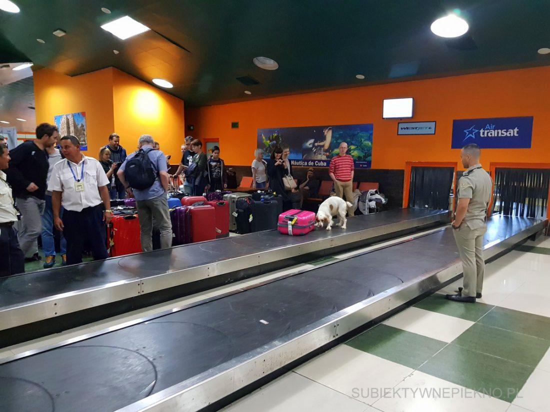 Kuba - Lotnisko Santa Clara - sprawdzanie bagażu przez psy