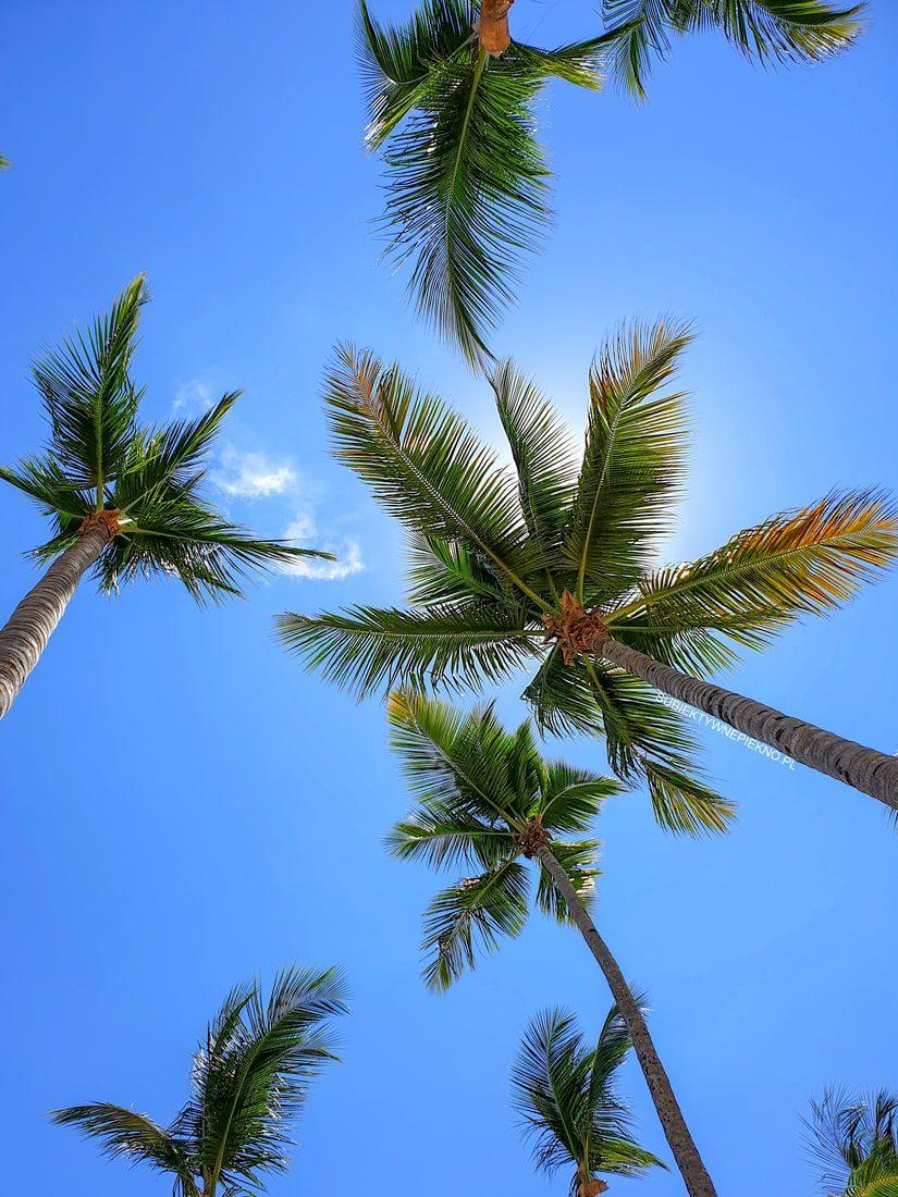 Puerto Plata Dominikana pogoda